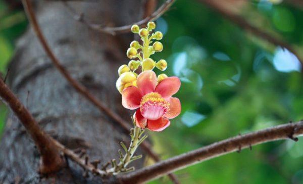 hoa vo uu 2