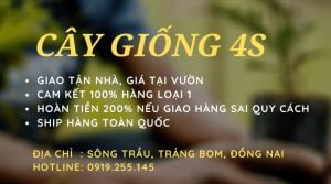 cay_giong_4s