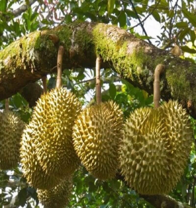 Phuong-phap-trong-cay-rung-lam-nghiep (1)